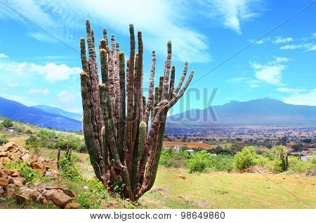 Bright sunny landscape with Organ Pipe cactus in foreground of desert valley Oaxaca, Mexico
