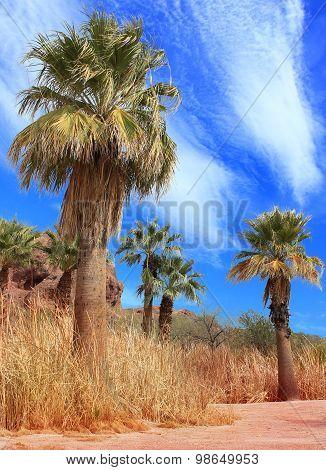 Desert Palm Oasis Phoenix Arizona