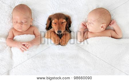 two Sleeping newborn babies with a dachshund puppy.
