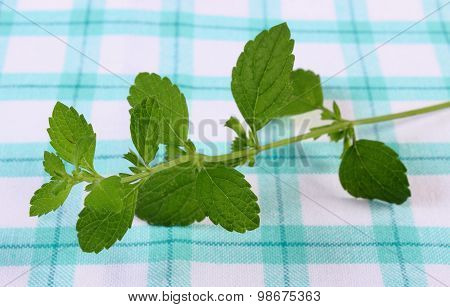 Fresh Healthy Lemon Balm On Checkered Tablecloth, Herbalism