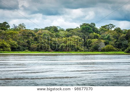 Amazon forest in Brazil