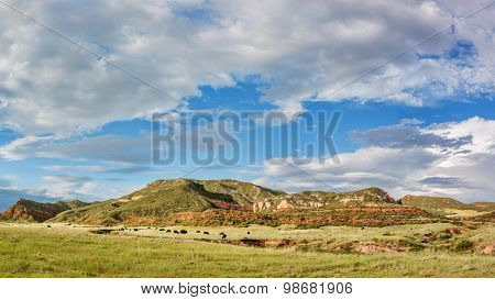 Red Mountain Open Space panorama - mountain ranch landscape in northern Colorado near Fort Collins, summer scenery