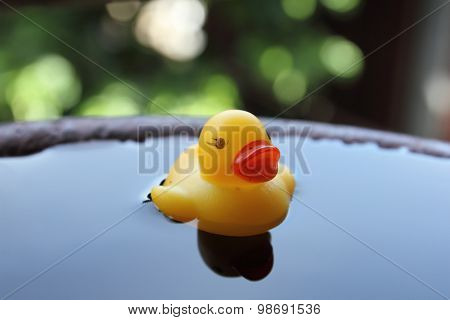 Rubber duck or toy duck