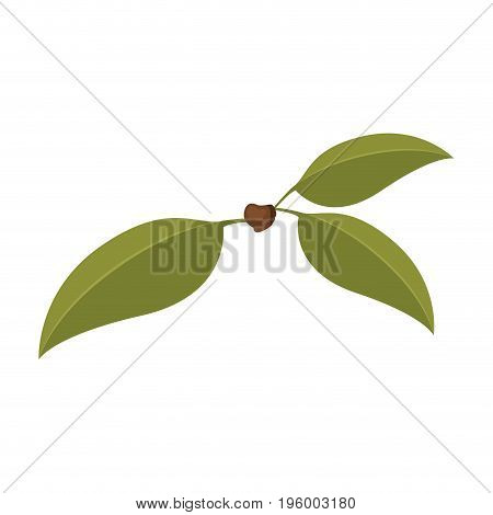 white background with three green leaves of cherry with stem vector illustration