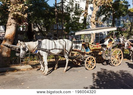 Horses and a coach, Traditional white wooden houses in the Turkish at the Princes' Islands