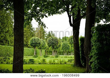 Beautiful summer garden with trimmed linden trees, fir-trees, bushes, perfect lawn, grass. Amazing landscape. The Catherine park in Saint Petersburg, Pushkin. Stylish garden design. Summer, summertime