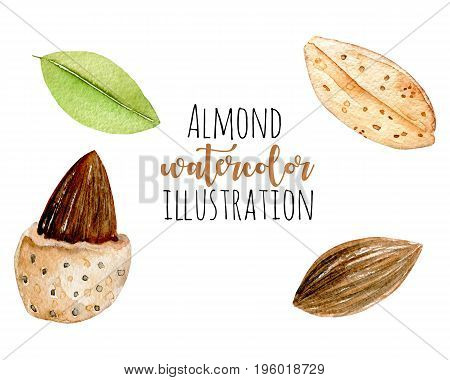 Set of watercolor almond elements, hand painted isolated on a white background