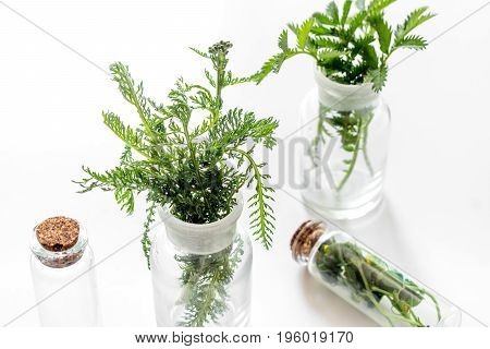 Fresh medicinal herbs in glass on white background.