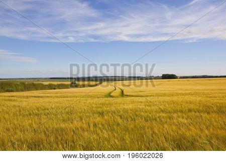 Vale Of York Barley