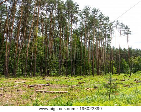 Iilegal Chaotic Deforestation In Ukraine With A Low Economy Leads To Baldness And Climatic Natural D