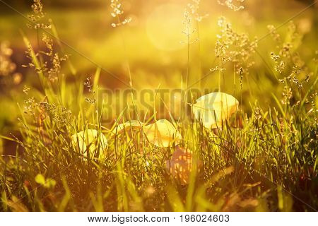 yellow fallen leaves lie on the grass. autumn nature blurred background