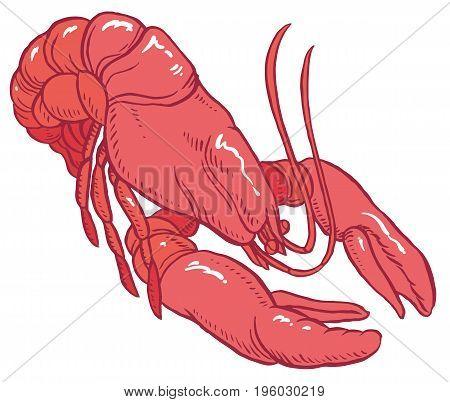 red lobster - vector hand-drawing illustration for restaurant menu or packaging design