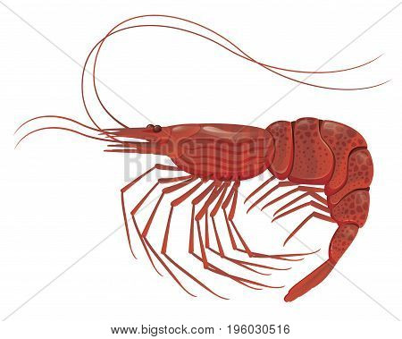 Cooked shrimp isolated on white realistic vector illustration