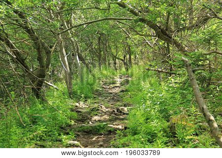path for tourists leading under the green trees on the Smrk Hill, Beskydy mountains, Czech Republic