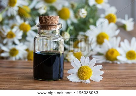 A bottle of dark blue chamomile essential oil with fresh chamomile flowers on a wooden background