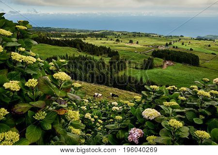A nice landscape view in Portugal Açores