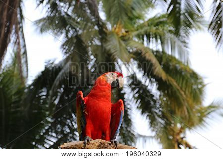 Parrot a Red Macaw Bird on branch
