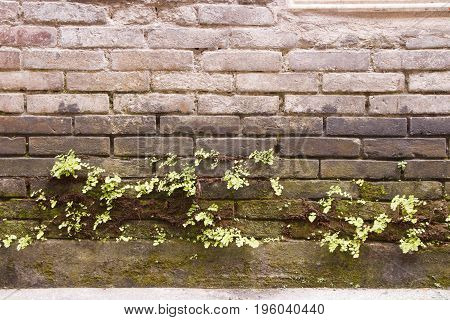 Ruin Brick Wall And Nature Green Plant Leaf