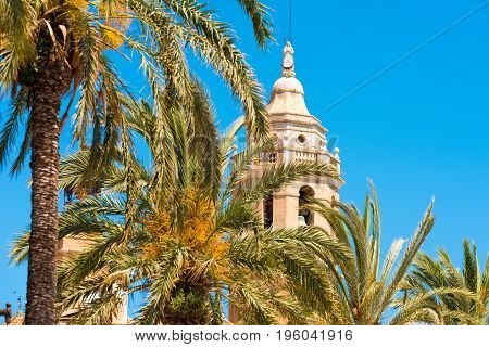 Palm Trees Close-up, In The Background A Tower Of The Church Of Sant Bartomeu And Santa Tecla In Sit