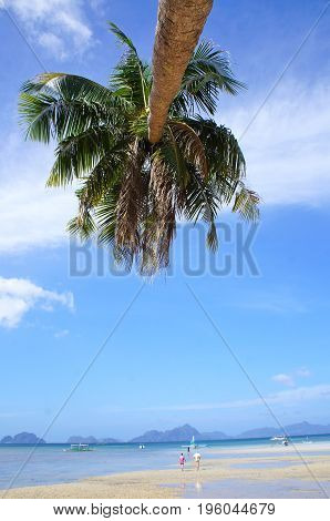 Palm Tree on a beach in El Nido Philippines on a sunny day