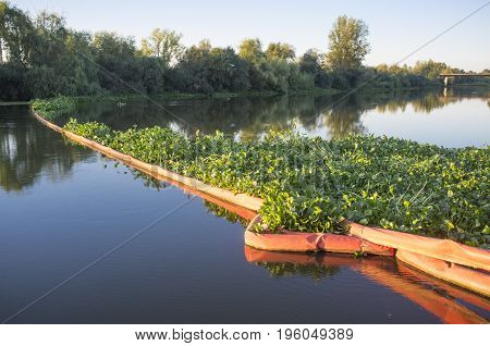 Floating barrier for control of invasive plant water hyacinth. Highly problematic invasive species at Guadiana River Badajoz Spain