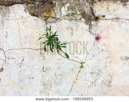 Vintage Background, Antique Grunge Backdrop Or Scratched Texture With Different Color Patterns