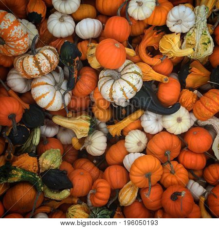 Gourds and pumpkins in different colors and shapes