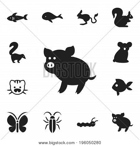 Set Of 12 Editable Animal Icons. Includes Symbols Such As Beast, Jerboa, Wild Rodent And More