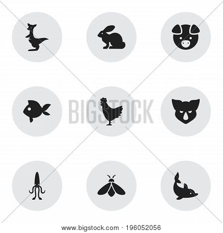 Set Of 9 Editable Zoo Icons. Includes Symbols Such As Turbot, Octopus, Honey And More