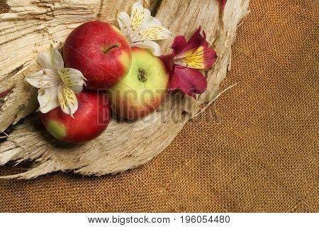 White Alstroemeria. White flower and apples