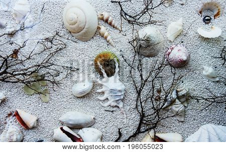 A background consisting of fine sand, seashells, twigs, pearls.
