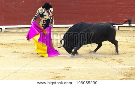 Spanish bullfight. The enraged bull attacks the bullfighter. Spain 2017 07.25.2017. Vinaros Monumental Corrida de toros. Juan Jose Padilla.