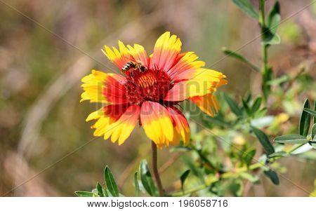 bee on wild flower in summer day