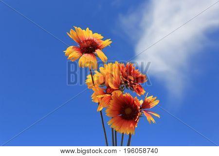 wild flowers on summer sky background