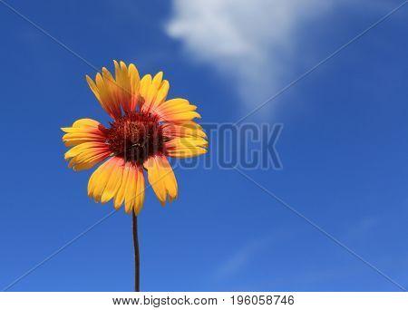 alone summer flower over blue sky background
