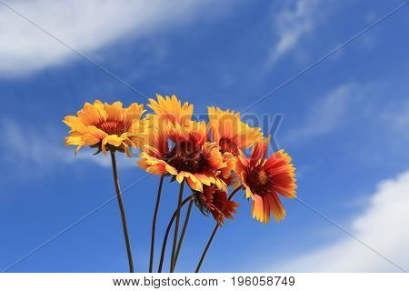 bunch of wild  flowers on summer sky background