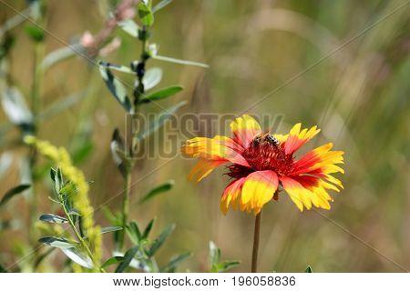 bee on nice summer wild flower