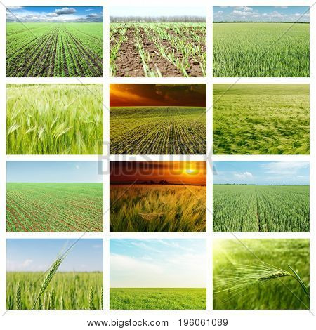 set of pictures with green agriculture fields. collage for internet projects