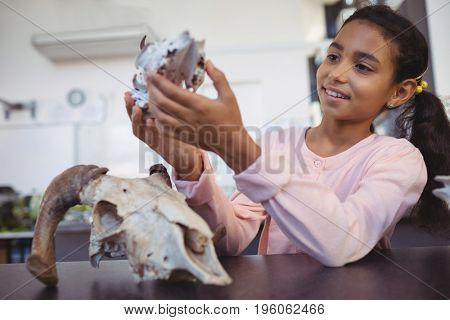 Happy elementary student examining animal skull by desk at science laboratory