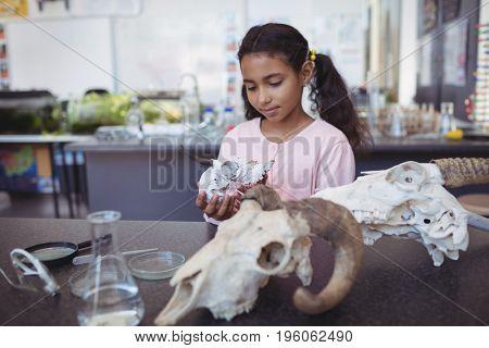 Schoolgirl holding animal skull at laboratory