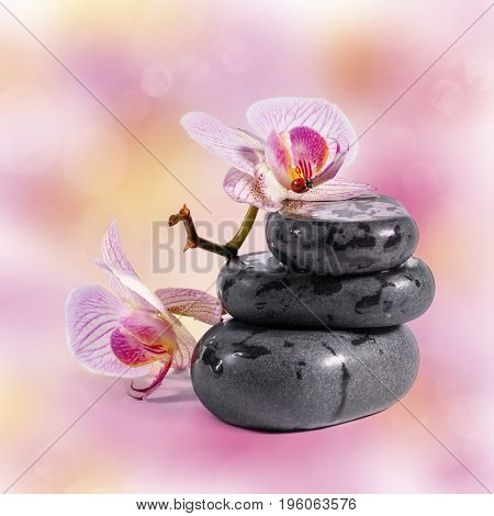 Zen stones with orchid and ladybird.