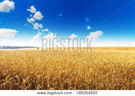 Grain field background, Wheat field.