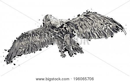 Black and white abstract eagle or hawk geometric illustration, isolated.