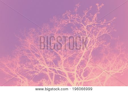 Beautiful soft pink color tree silhouette. Abstract nature background.
