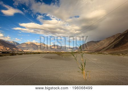 Sand dunes in Nubra Valley in Ladakh, Kashmir, India