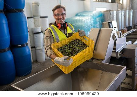 Portrait of happy worker putting harvested olive in machine at factory