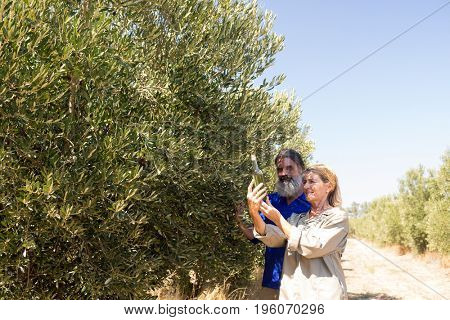 Couple examining olive oil in farm on a sunny day