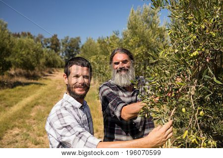 Portrait of happy friends examining olive on plant in farm