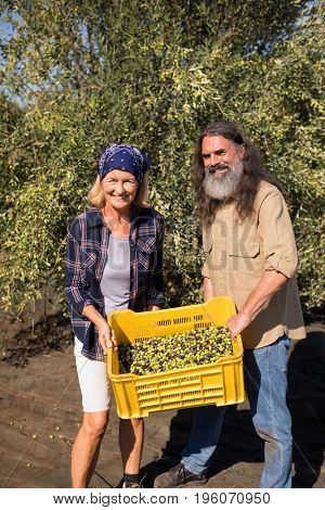 Portrait of happy couple holding harvested olives in crate on a sunny day