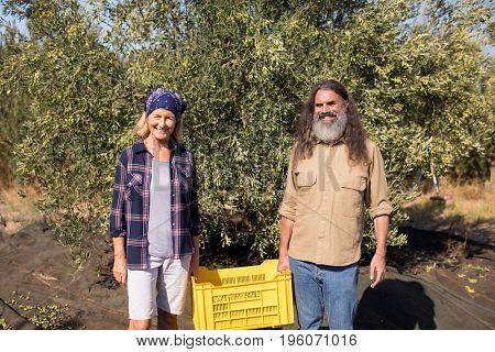 Portrait of happy couple holding crate in olive farm on a sunny day